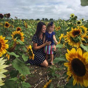 Sunflowers at Lakeland Orchard & Cidery